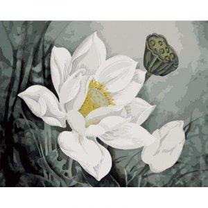 An Amazing White Flower