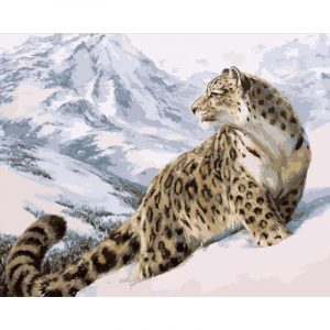 Snow Leopard looking at You