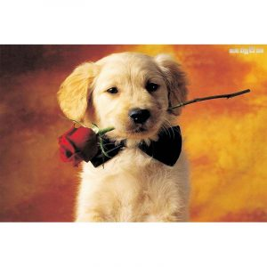 Give me that rose - Cute Dog