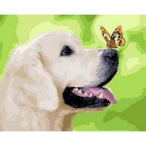 Butterfly Sitting on Dog