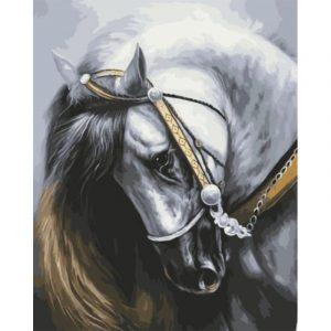 Horse Saying No