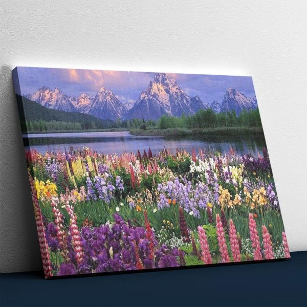 Flower Fields and the Mountains