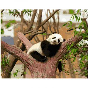 The Lazy Panda