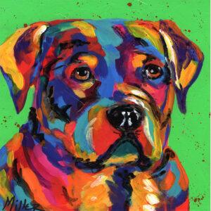 Why So Sad? Colorful Dog